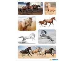 Kleepsud Decor - hobused