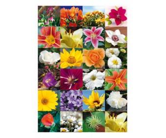 Kleepsud Decor - erinevad lilled