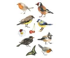 Kleepsud Decor - akvarell-linnud