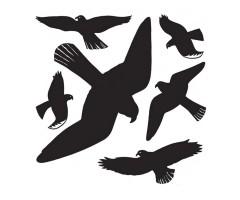 Aknakleebis Herma - linnud