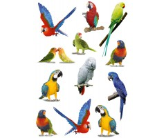Kleepsud Magic - papagoid