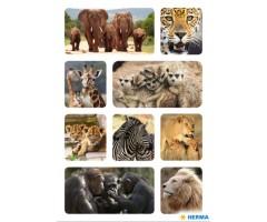 Kleepsud Decor - Aafrika loomad