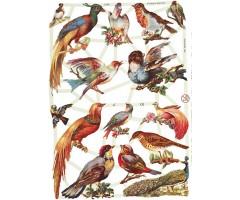 Paberilõiked Die-Cuts - linnud